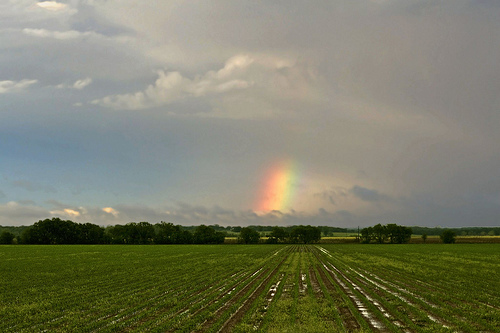 A reminder of God's promise over the cornfields.